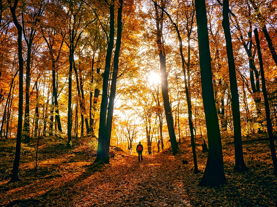 A person walking through a forest in autumn