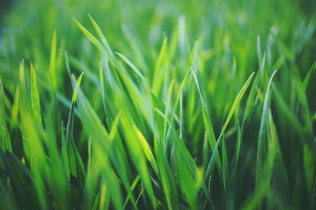 Close up of blades of grass.
